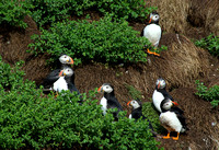Puffins and Gannets and Whales Oh My!/ Newfoundland Wildlife