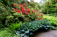Glenveagh Castle Gardens, Rhododendrons and hostas