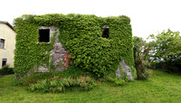 Ivy-clad ruin, Fethard, Co. Wexford