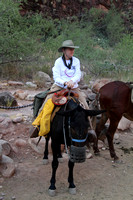 Grand Canyon Phantom Ranch Mule Ride